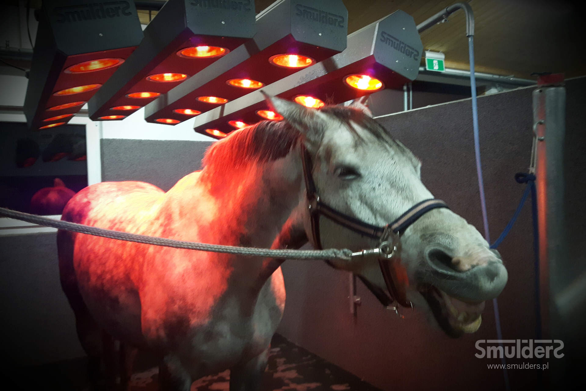 http://www.smulders.pl/wp-content/uploads/2019/02/f008_horse-solariums_solarium-for-horses_SMULDERS_PL.jpg